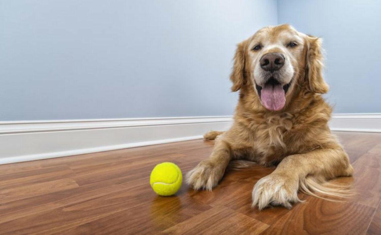 WVH Senior Dog