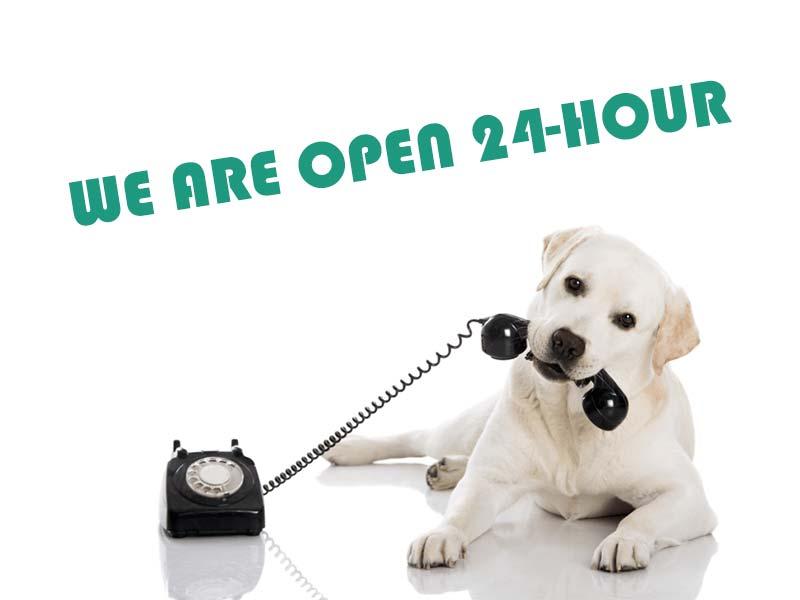 24 hours veterinary service